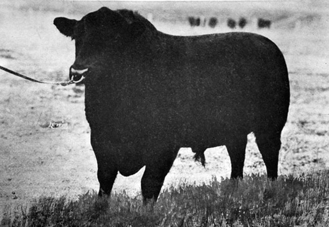 Cows_EarlMarshall_650